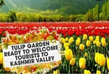 Photo of KASHMIR GLITTERS WITH TULIP AGAIN